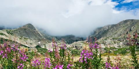 purple-flowers-in-foggy-Colorado-mountain-valley