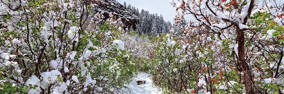Black-Canyon-hiking-trail-snow_desktop