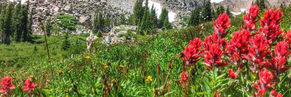 Colorado-spring-flowers-blooming_20170404152900_838633