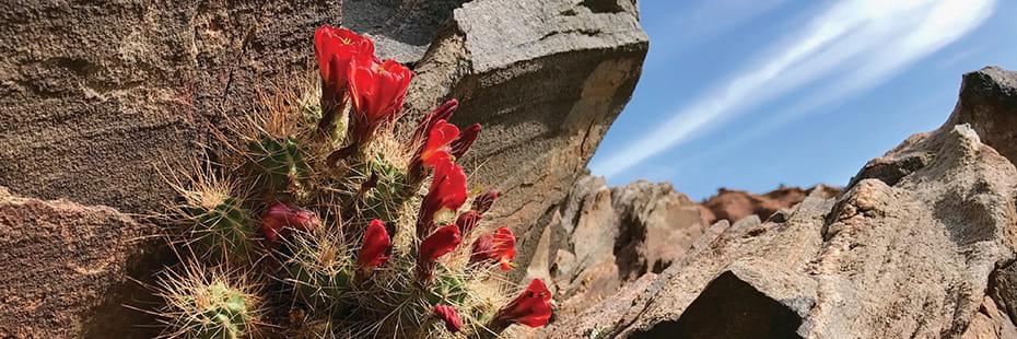 Dominguez-Canyon-Colorado