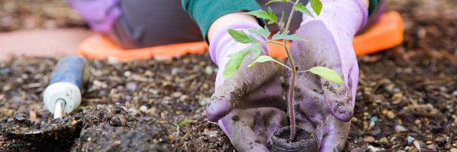 woman-planting-herbs-in-garden