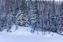 CC-Skiing-Thumbnail