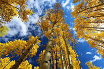 Colorado-fall-leaves