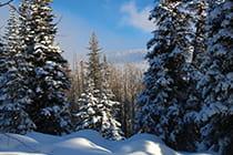 Grand-Mesa-in-winter