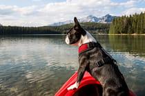 colorado-dog-lovers-guide_Mobile