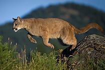 colorado-wildlife-safety-tips_Mobile