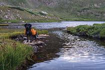 dog-hiking-in-Colorado_mobile