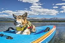 dog-on-SUP-in-Colorado