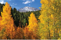 fall trees in colorado