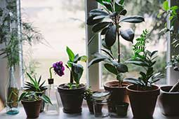 indoor-plants-tb