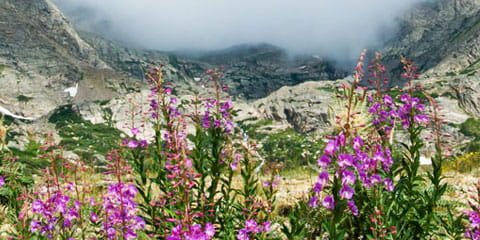 Colorado mountains with clouds and wildflowers