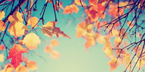 fall-leaves-against-a-blue-sky