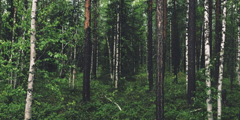 forest trees and brush