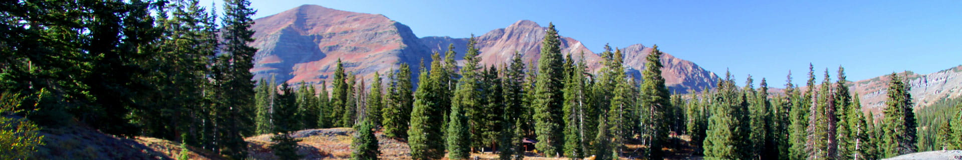 pine trees set before mountain peaks