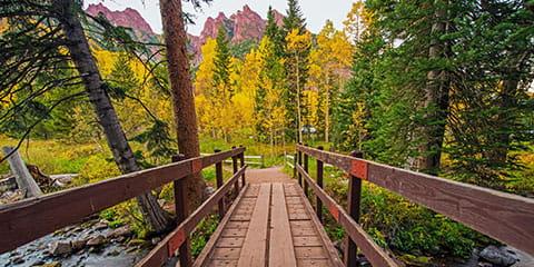bridge-in-forest