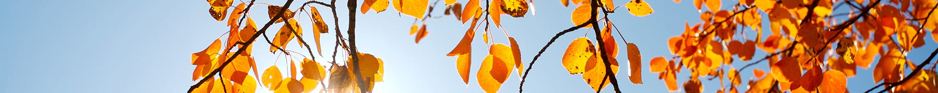 tree-branch-with-yellow-leaves