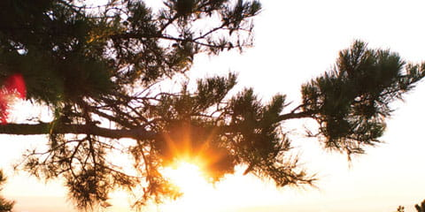 a person on top of a hill with some trees beside him looking out towards the sunset
