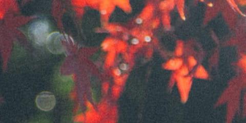 dark fall colored leaves
